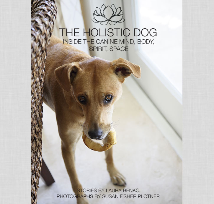 The Holistic Dog by Laura Benko